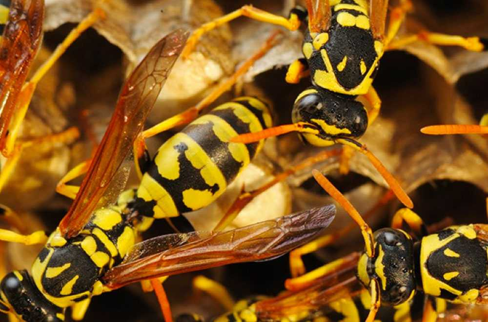 Entreprise de traitement contre les insectes Saint-Hippolyte
